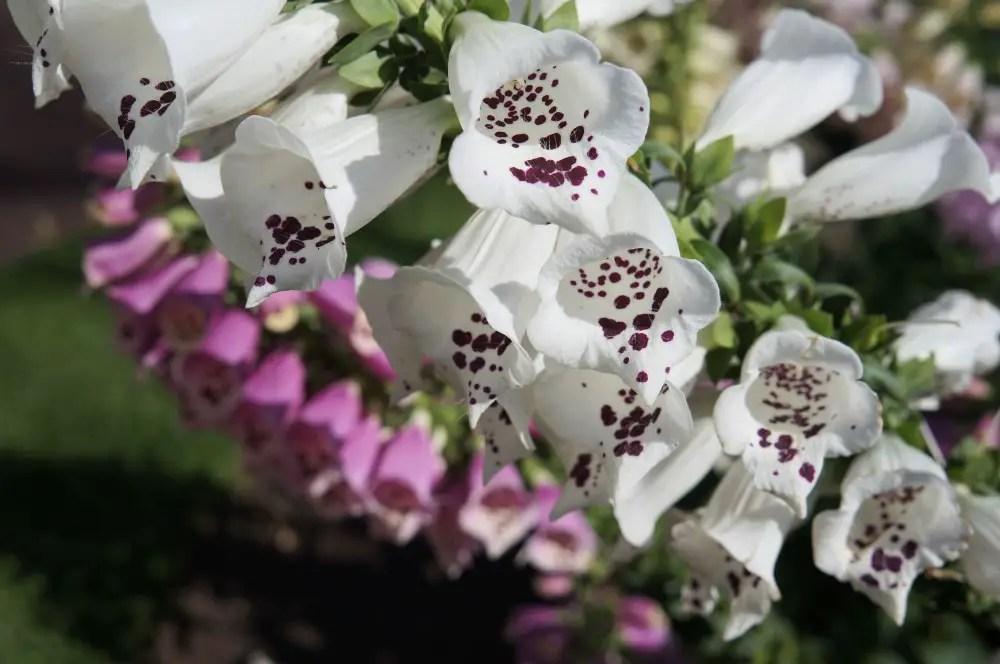 New Zealand Albert Park Flowers