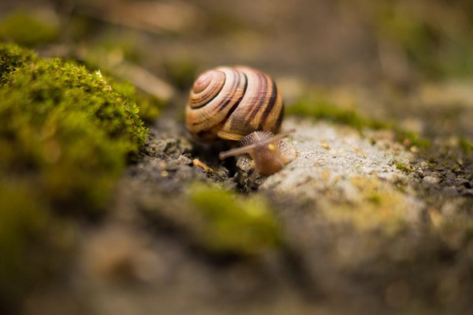 animal-macro-shell-2126
