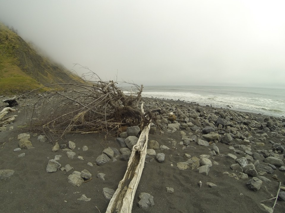Windswept tree at Lost Coast