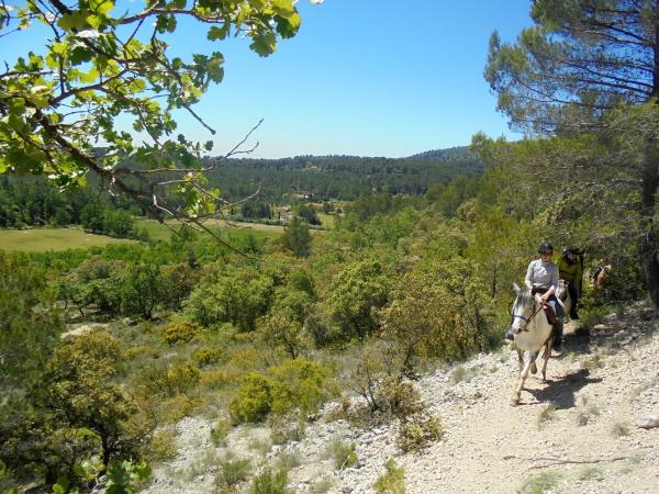 Toute notre offre de randonnées en étoile et séjours équestres en Provence