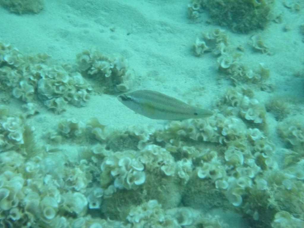 L'archipel de la Galite un trésor naturel dans un coin perdu - poissons