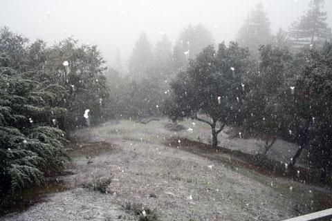 backyard winter