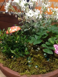 Lucky shamrocks in the fairy garden.