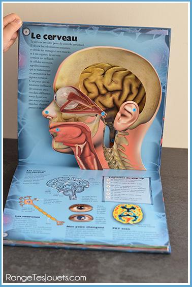 livre-cerveau-pop-up