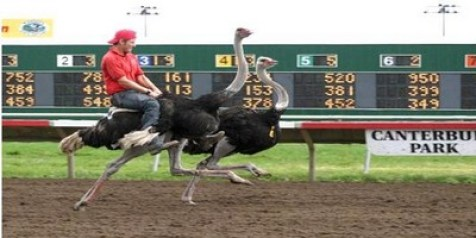 Riding and Racing Ostriches - Unusual Sports Around the World