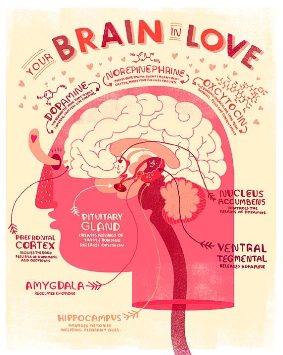 otak-dalam-cinta