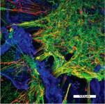 3D Human Neural Network