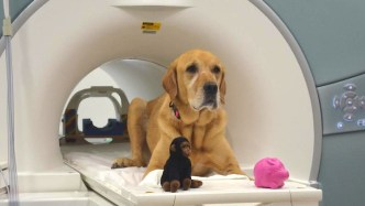 brain imaging shows how dogs process words