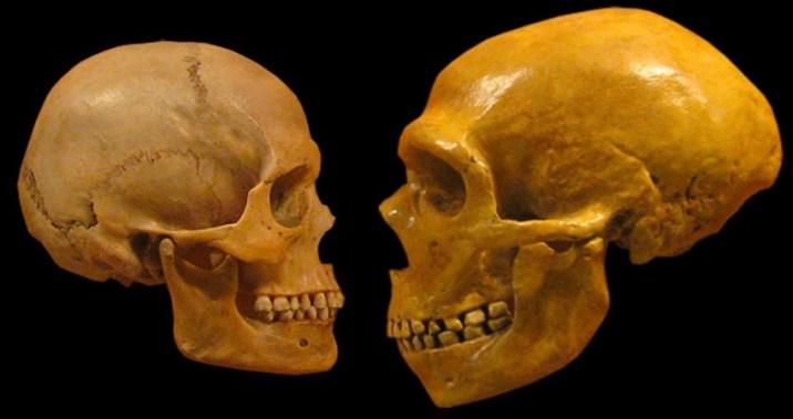 third, unknown human ancestor