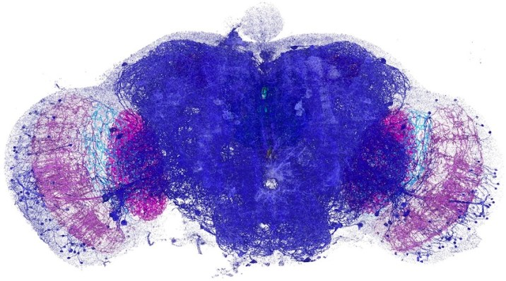 Nanometric Resolution Of Entire Brain