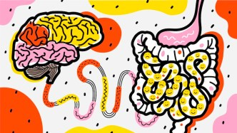 Link Between Gut Bacteria and Depression