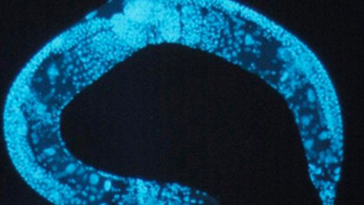 Artificial Intelligence Predicts Worm Behavior