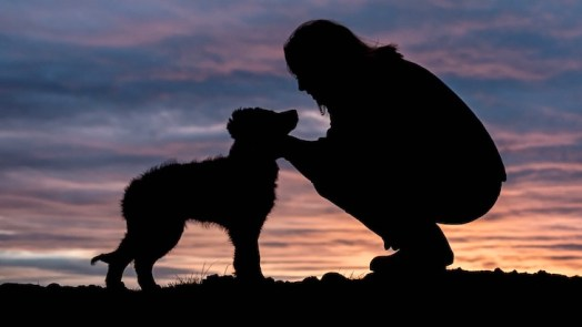 dog reduce risk of heart attack