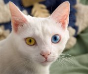 facts about cat eyes