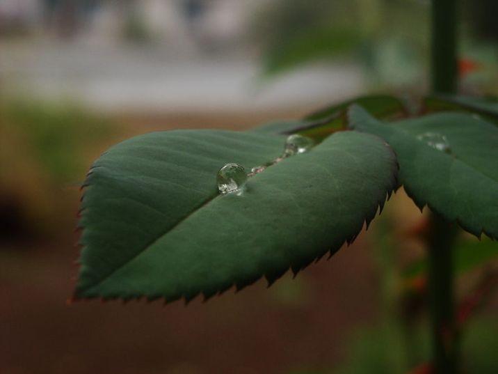 A raindrop on leaf