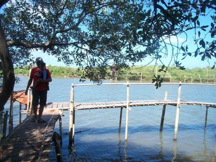 hutan mangrove 5