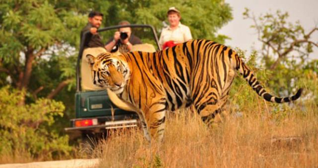 Image result for Go On a Wildlife Safari