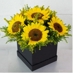 6 sunflowers in a black box