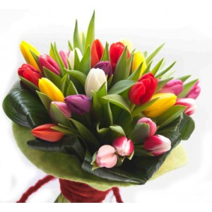 assorted-colorful-tulips