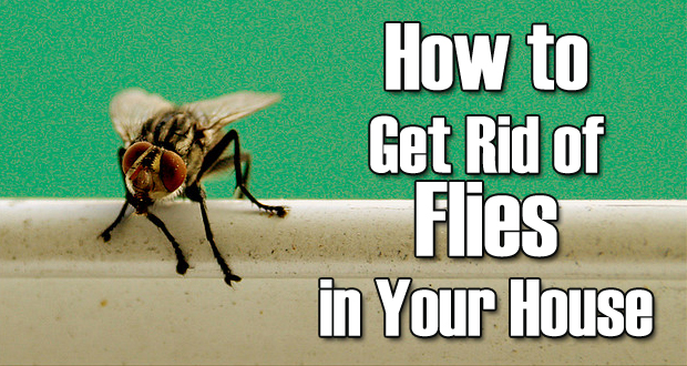 How To Get Rid Of Fleas On Dogs With Home Remedies Home Remedies To
