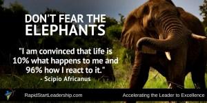 Don't Fear the Elephants