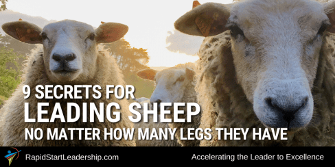 Nine Secrets for Leading Sheep - No Matter How Many Legs They Have