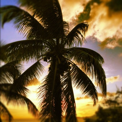 Palm trees offset by the sunset. All that's missing is the bottle of Corona in the sand, right?