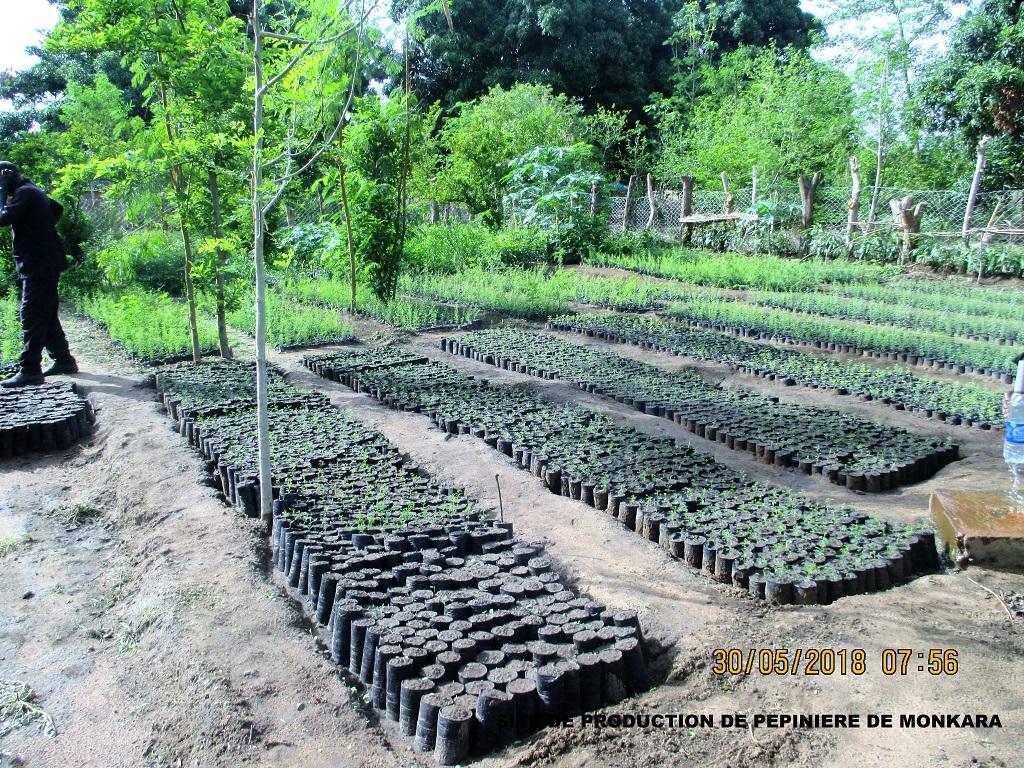 Site de production de pépinières