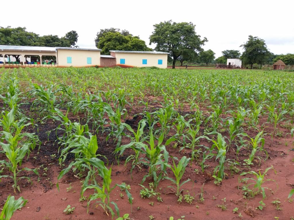 AMCC+, Phase 2 (Champs de maïs au sein de la ferme expérimentale RAPS-Développement