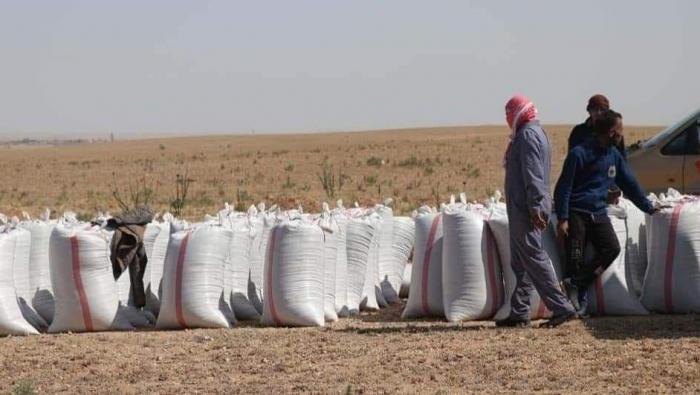 """مراكز حبوب """"قسد"""" تبتز مزارعي الرقة لشراء محاصيلهم"""