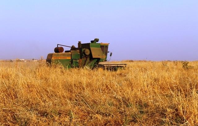 الجزيرة السوريّة تراجع في الإنتاج الزراعيّ