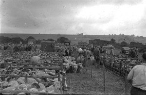 83. Agricultural. Rasen Mail glass neg 083