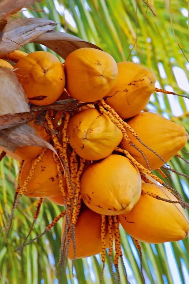 coconuts-_02-997x1500