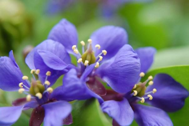 Home decor Lignum Vitae Flower