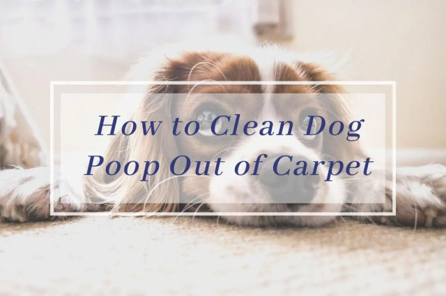 How to Clean Pet Poop & Pee from the Carpet Easily - RateMyCleaner
