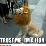 lion_dog-93478