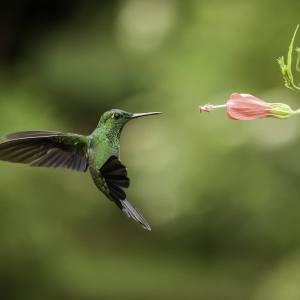 attract-hummingbird