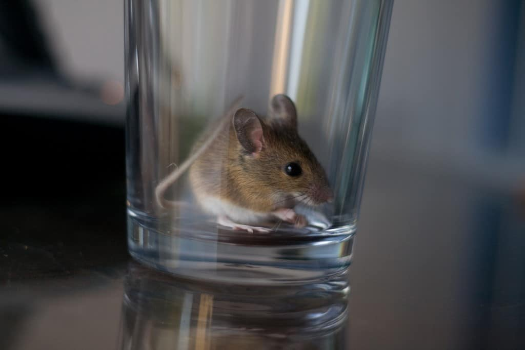 If You See One Mouse How Many Do You Have Two Scenarios