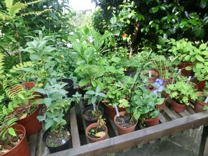 Bargain plants are plants that thrive in yoru garden