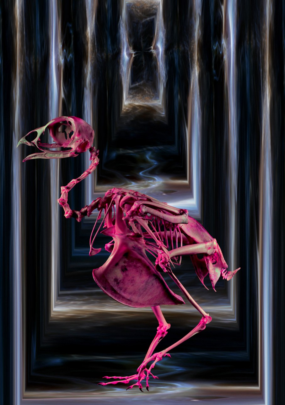 The Pink Bird Corridor by Soren James