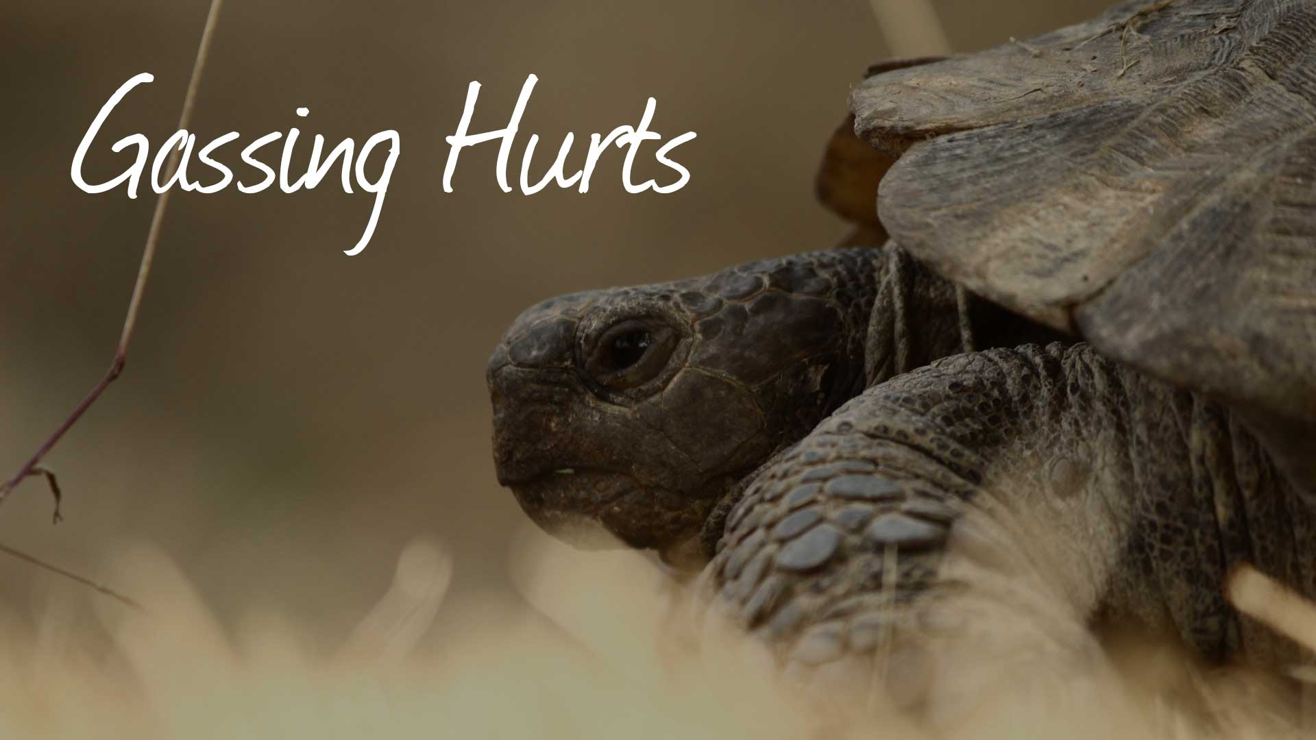 Gassing Hurts Wildlife