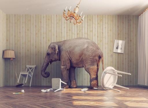 Der berühmte Elefant im Porzellanladen