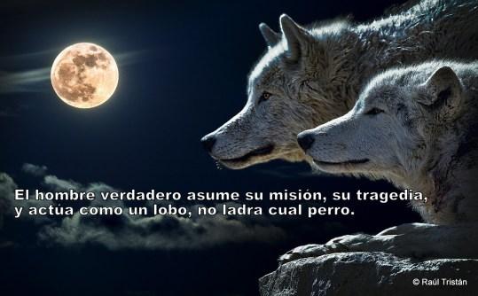Lobos o perros
