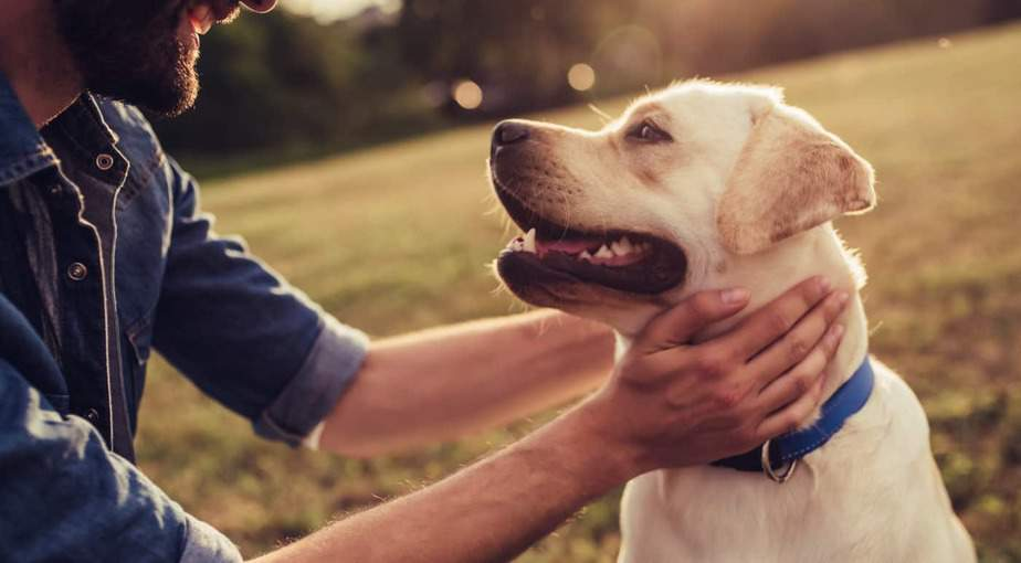 The 10 Best CBD Oils for Dogs (and Other Pets) for 2019 | RAVE Reviews