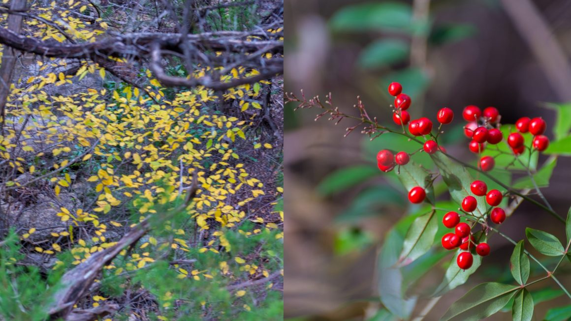 Wild flowers and leaves - Canyon Trail Austin Texas