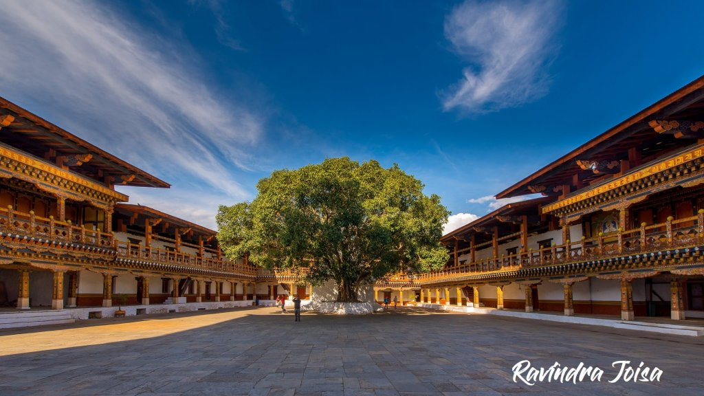 Bodhi Tree in the first courtyard of Punakha Dzong