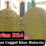 Durian D24, Buah Durian Unggul Khas Dari Negara Malaysia