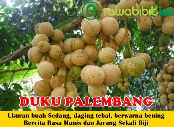 Duku Palembang