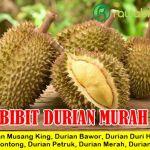 Jual Bibit Durian Terbaik