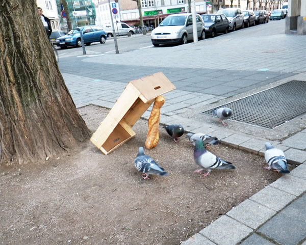 Attrape pigeon